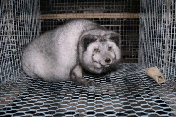 PROD-fur-farm-investigation1