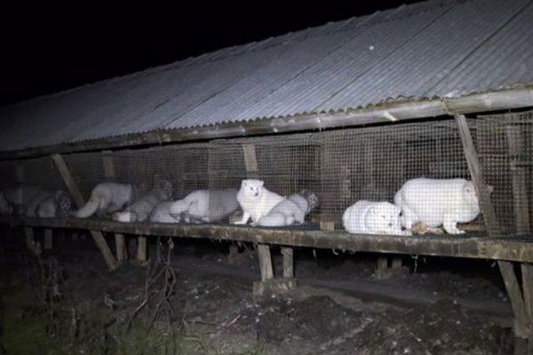 PROD-fur-farm-investigation2