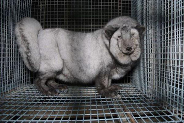 PROD-fur-farm-investigation4